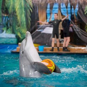 Дельфинарии, океанариумы Давыдовки