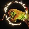 Цирки в Давыдовке