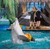 Дельфинарии, океанариумы в Давыдовке