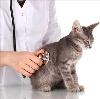 Ветеринарные клиники в Давыдовке